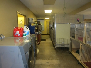 Yorkshire Veterinary Hospital